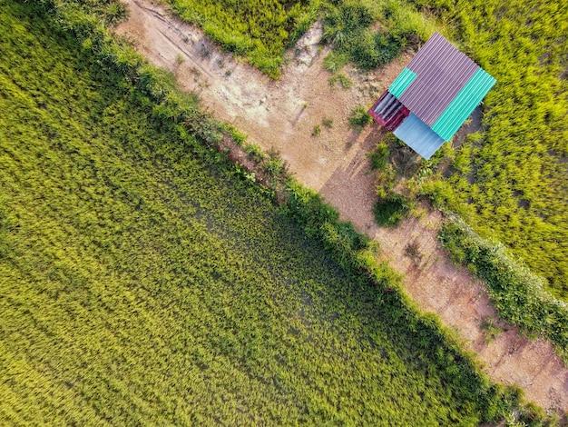 Fotografia aérea, uma cabana nos campos de arroz verde na zona rural, tailândia