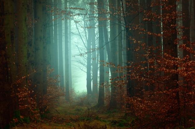 Fotografia de floresta
