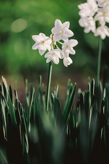 Fotografia de foco seletivo de flores de pétalas brancas