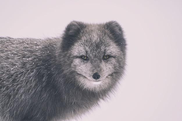 Fotografia de lobo com foco seletivo
