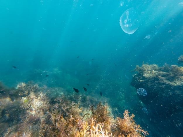 Fotografia do fundo do mar, vida selvagem subaquática