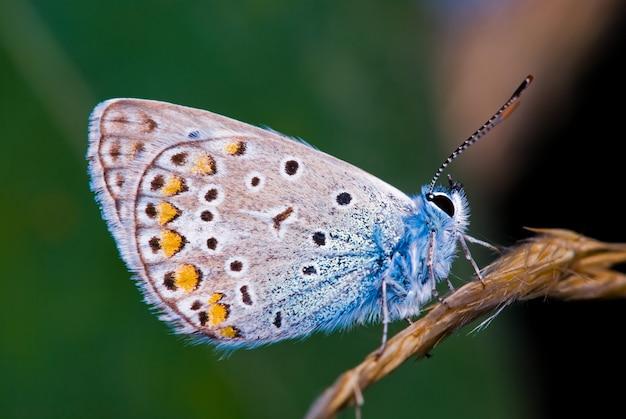 Fotografia macro da borboleta na natureza