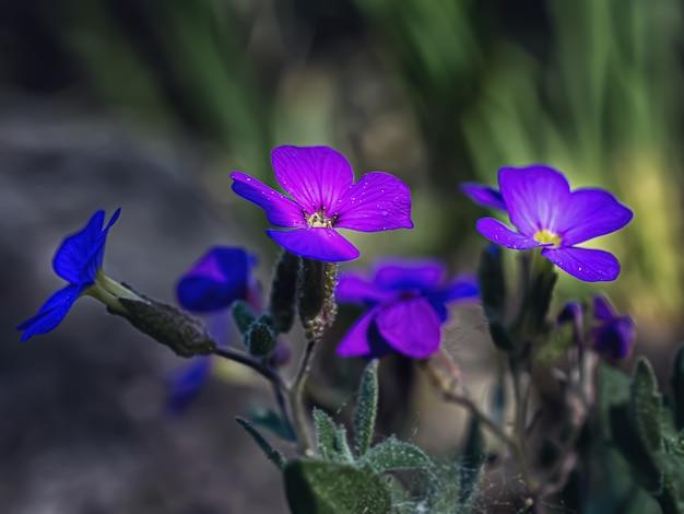 Fotografia macro de flores azuis