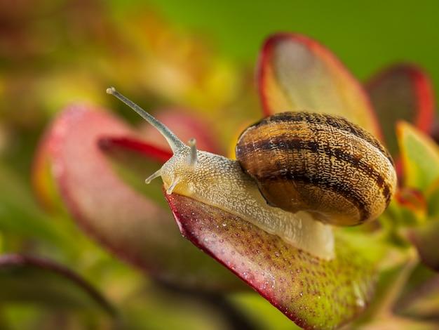 Fotografia macro de um caracol em uma planta.