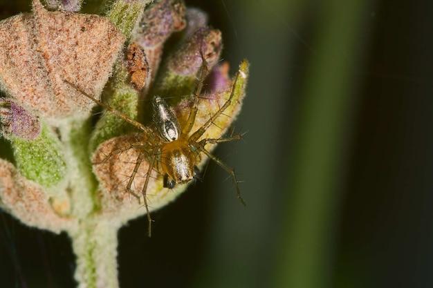 Fotografia macro de uma aranha em uma planta com flor