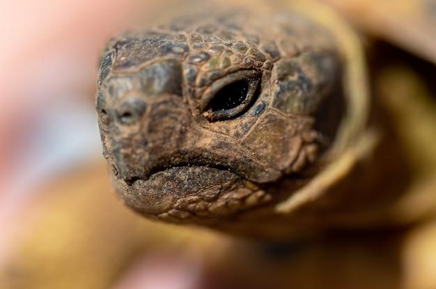 Fotografia macro do rosto de uma tartaruga com o fundo desfocado