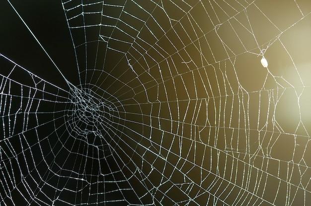 Fotografia retroiluminada de uma teia de aranha
