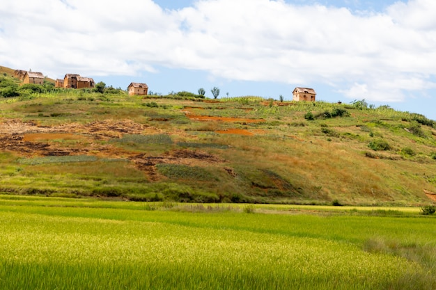 Fotografias de paisagens de campos e paisagens verdes na ilha de madagascar