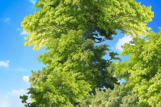 Fotografias panorâmicas de árvores tranquilas e céu azul