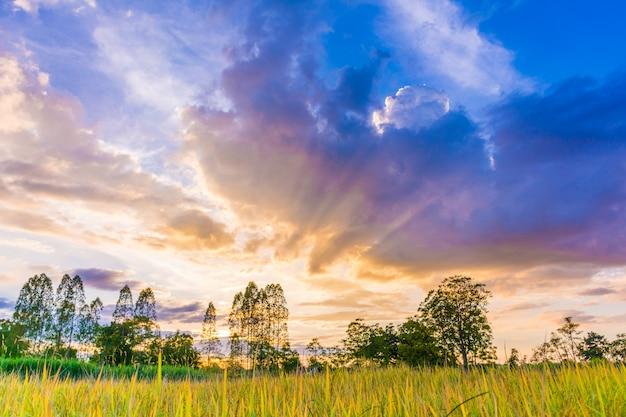 Fotos de campos de arroz.