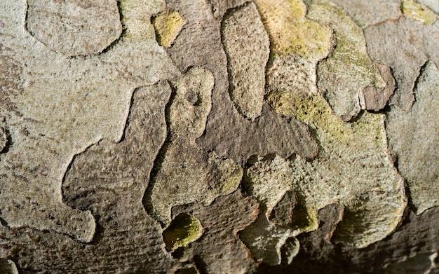 Fotos de estoque de casca de árvore, vista superior de imagens de fundo da natureza, textura de casca de madeira velha. fundo da arte abstrata, close-up padrão de fundo da superfície da casca de sicômoro plano colorido de camuflagem