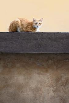 Fotos de gato naturalmente.