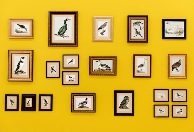 Fotos de pássaros em quadros pendurados na parede amarela