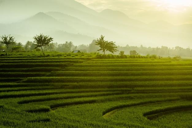 Fotos minimalistas de campos de arroz com neblina matinal que ilumina as belas montanhas