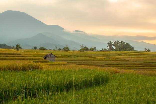 Fotos minimalistas de campos de arroz com três cores e montanhas diferentes