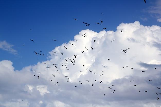 Fragata pássaro silhueta backlight época de reprodução