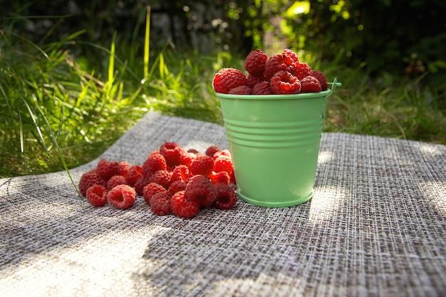 Framboesas em um balde pequeno deixam grama e um monte de frutas vermelhas conceito de colheita