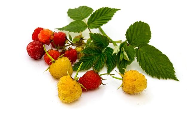 Framboesas frescas selvagens vermelhas e amarelas com folhas verdes, isoladas no fundo branco.