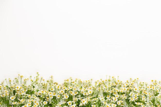Framee floral de flores de camomila. camada plana, vista superior.