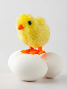 Frango bebê em pé sobre ovos