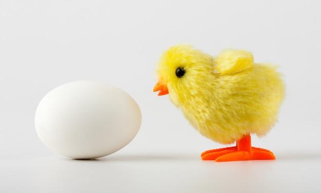 Frango bebê olhando para ovo
