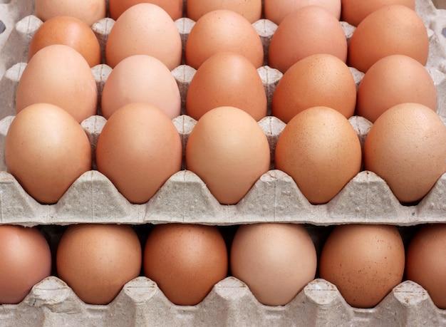 Frango fresco ovos marrons em embalagem