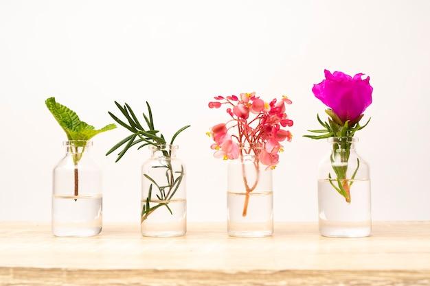 Frasco de óleo essencial com ervas, plantas e flores