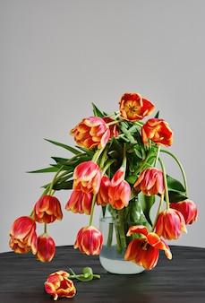 Frasco de vidro com um buquê de lindas tulipas vermelho-amarelas desbotadas contra o fundo de uma parede branca, em uma mesa de madeira preta
