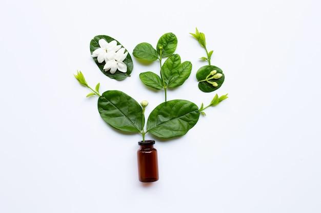 Frasco do petróleo essencial com flor e folhas do jasmim no branco.