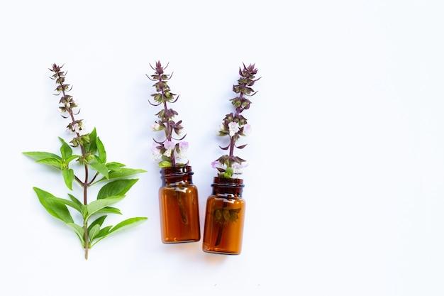 Frascos de óleo essencial com folhas e flores frescas de manjericão.