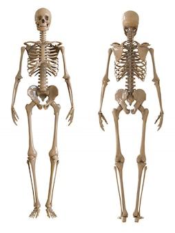 Frente de esqueleto e vista traseira