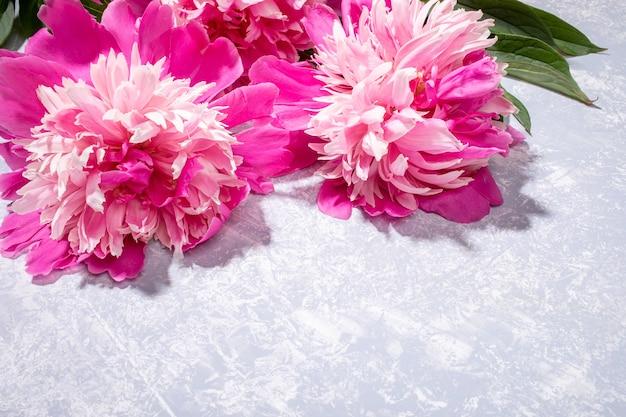 Frescas lindas peônias rosa estão deitado no pano de fundo cinza texturizado close-up. dia dos namorados, dia das mães, mensal da mulher, dia internacional da mulher, cartão floral do casamento. copie o espaço para o texto.