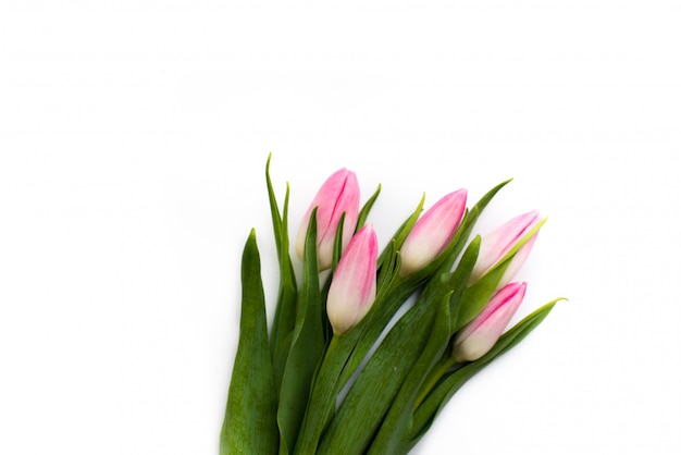 Fresco buquê de cinco tulipas flores da primavera.