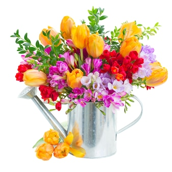 Frésia azul, violeta e vermelha e flores de tulipa laranja em pote de metal isolado no branco