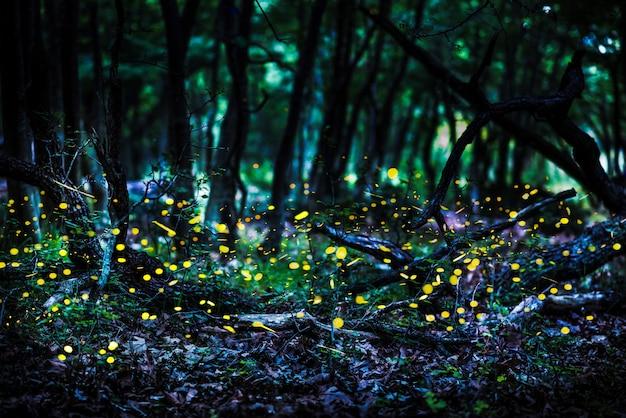 Frireflies que voam na floresta no crepúsculo.