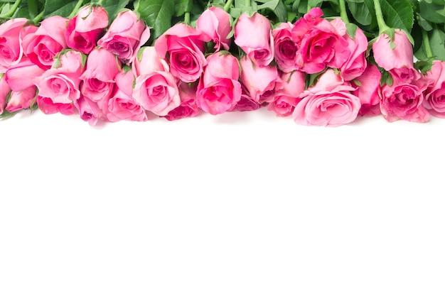 Fronteira da bela rosa doce fresca rosa