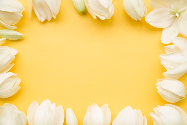 Fronteira de flor branca em fundo amarelo com espaço de cópia de texto