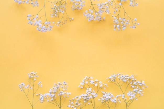 Fronteira de flores brancas sobre o pano de fundo amarelo