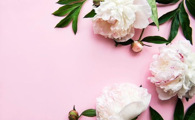 Fronteira de flores de peônia fresca com espaço de cópia em fundo rosa pastel, plana leiga.