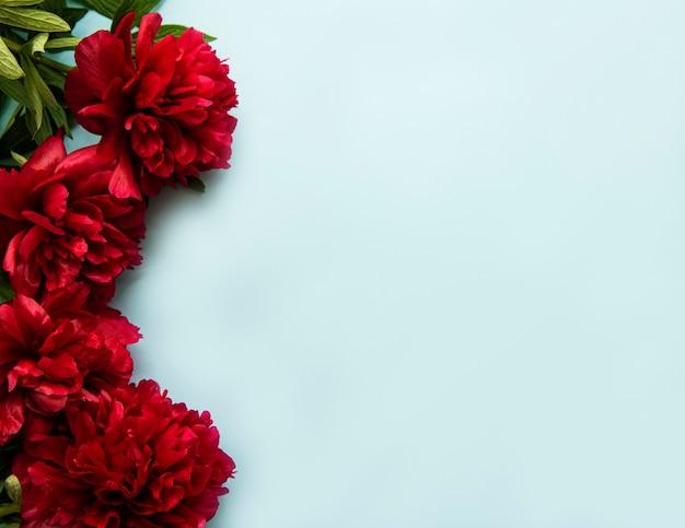 Fronteira de flores de peônia rosa fresca com espaço de cópia em fundo azul pastel, plana leiga.