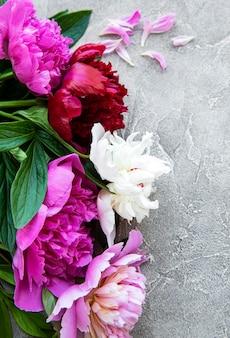 Fronteira de flores de peônia rosa fresca com espaço de cópia no fundo cinza de concreto, plano leigo.