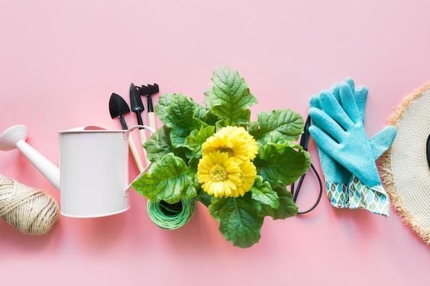 Fronteira de jardinagem com gerbera, ferramentas e flores na