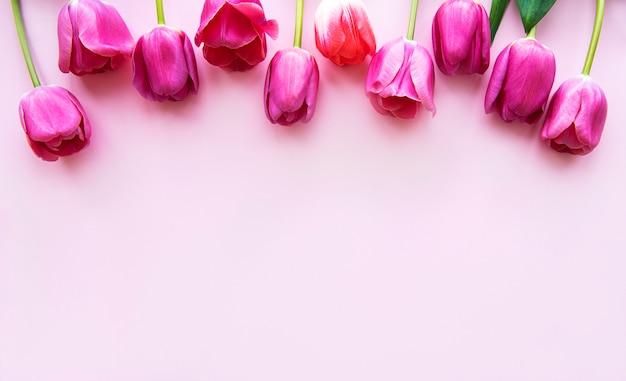 Fronteira de lindas tulipas em um fundo rosa
