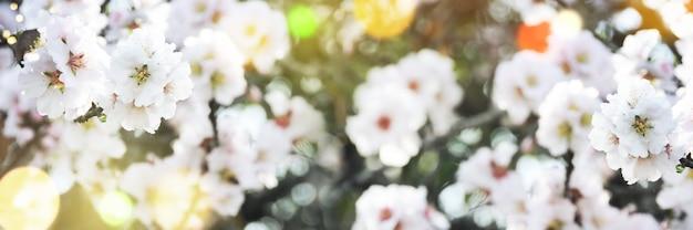 Fronteira de primavera, fundo de temporada