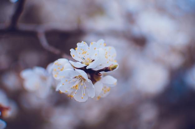 Fronteira de primavera ou fundo com flor rosa
