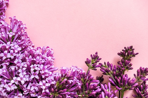 Fronteira de ramos florescendo de lilás sobre fundo rosa com espaço de cópia para o seu texto. olá conceito primavera, dia das mulheres