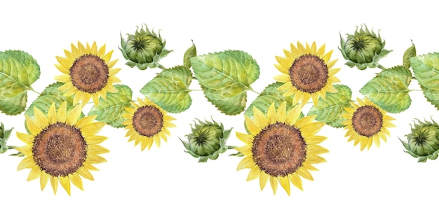 Fronteira em aquarela com girassóis brilhantes, folhas e brotos da planta