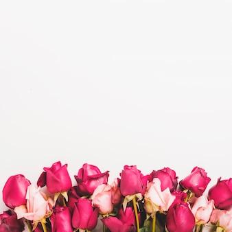 Fronteira inferior feita com rosas vermelhas e cor de rosa sobre fundo branco