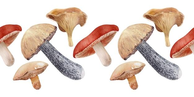 Fronteiras em aquarela com diferentes tipos de cogumelos