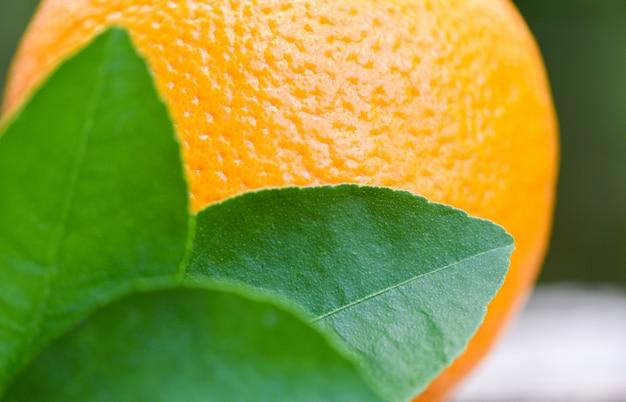 Fruta laranja fresca e folhas verdes